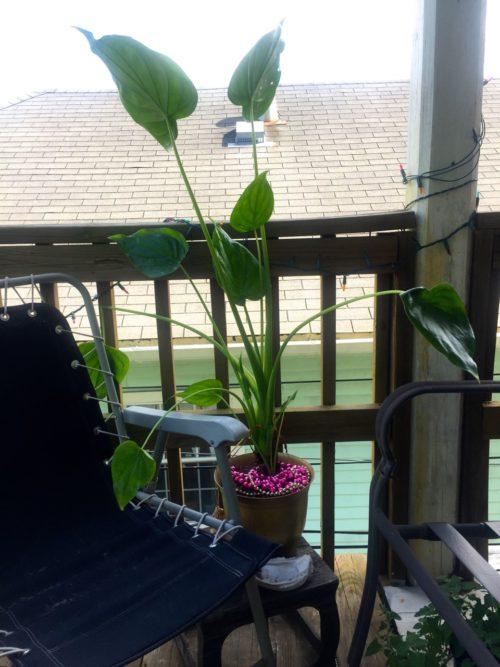 houseplant-daytime